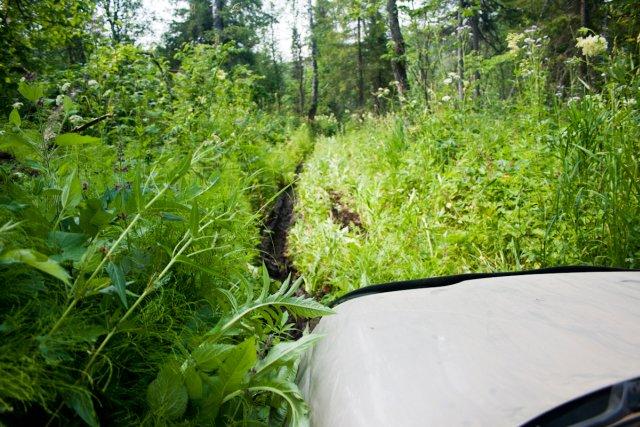 Шеви Нива в лесу