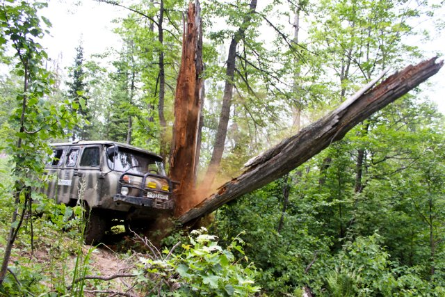 Буханка валит дерево