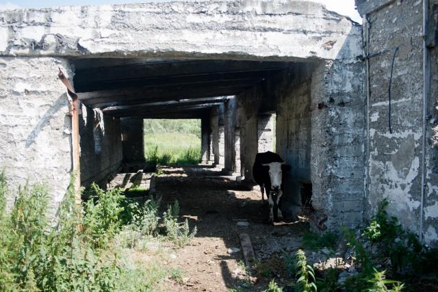 Заброшенная ферма Нижний Авзян