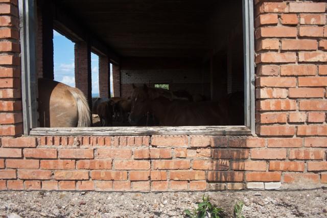 Заброшенная ферма Кулгунино