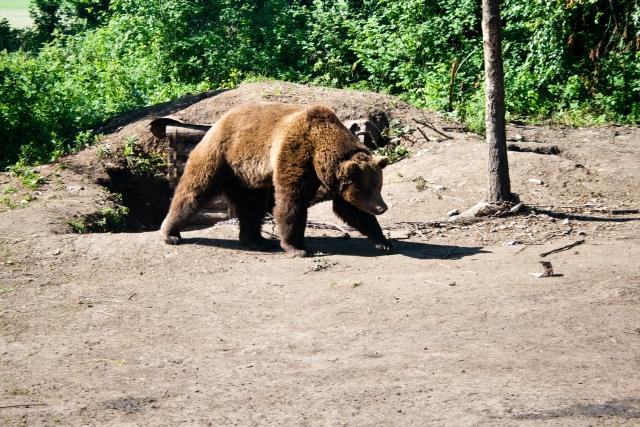 Красноуфимский зоопарк