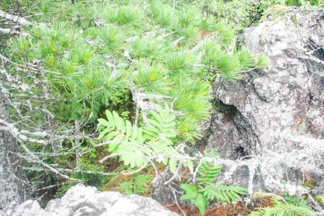 Гора Колпаки