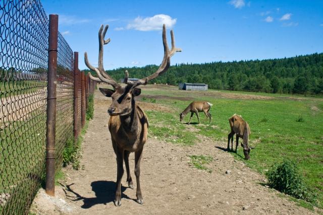 Страусиная и оленья ферма Маралы