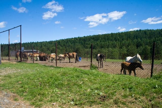 Страусиная и оленья ферма Якутские лошади