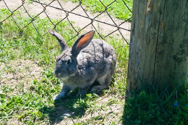 Страусиная и оленья ферма Кролики