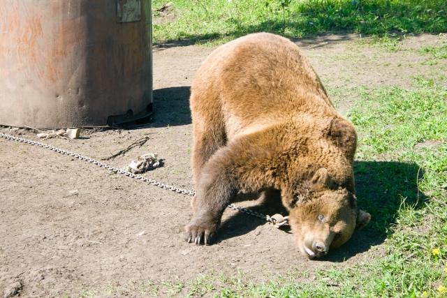Красноуфимский зоопарк Медведь