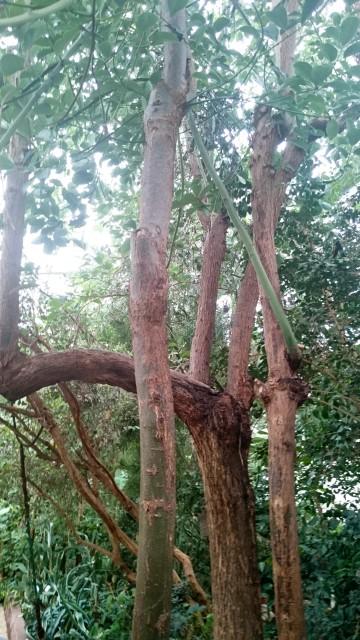Уфимский ботанический сад Лавр