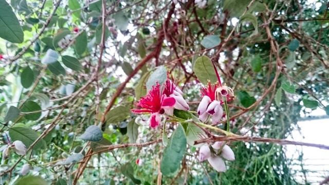 Ботанический сад Уфы Акка