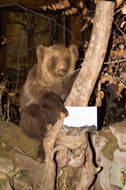 Музей леса Медведь