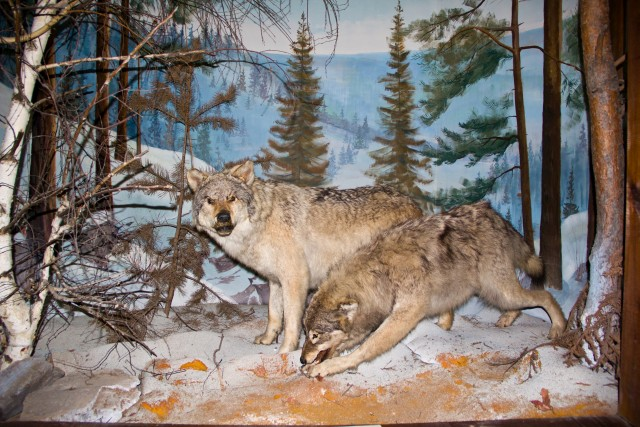 Музей леса Волки