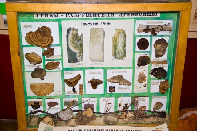 Лесной музей Грибы