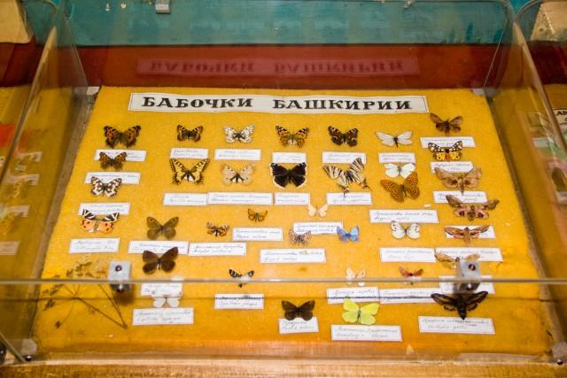 Лесной музей Бабочки Башкирии
