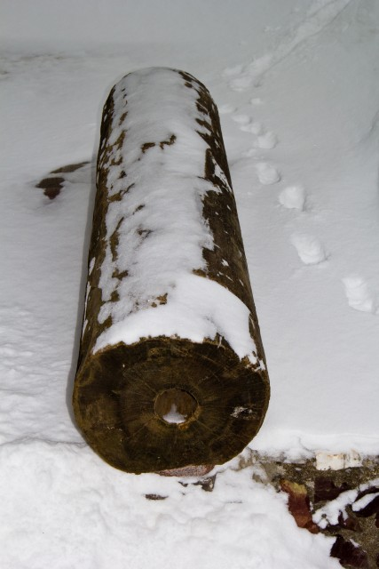 Музей леса Деревянная труба