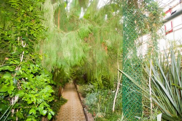 Ботанический сад Уфы Кипарис траурный