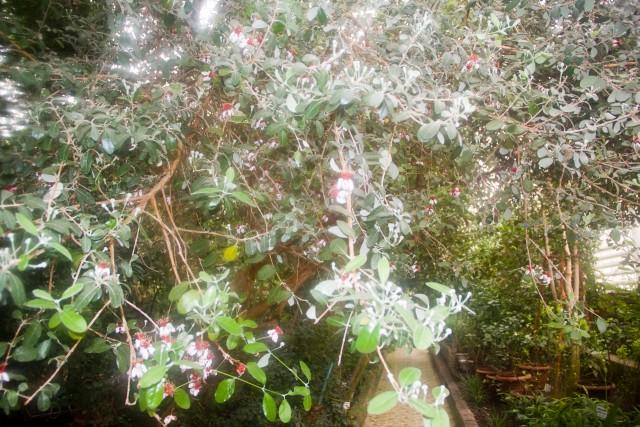 Уфимский ботанический сад Акка