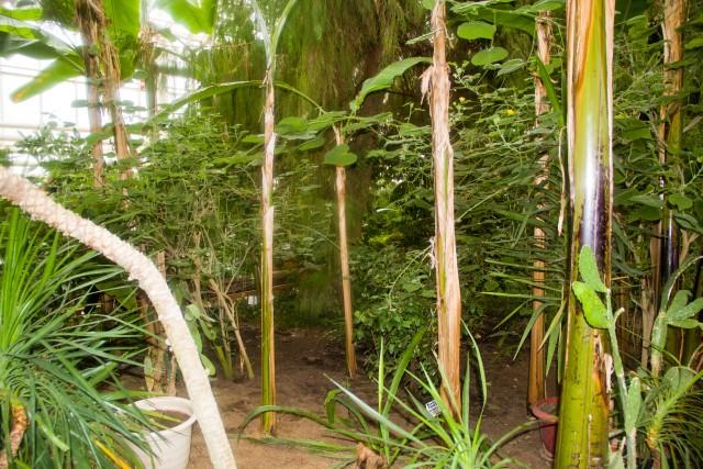Ботанический сад Уфы