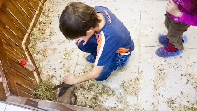 Контактный зоопарк Лесное посольство Кролики