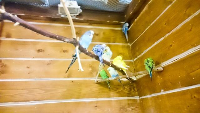 Контактный зоопарк Лесное посольство Попугаи