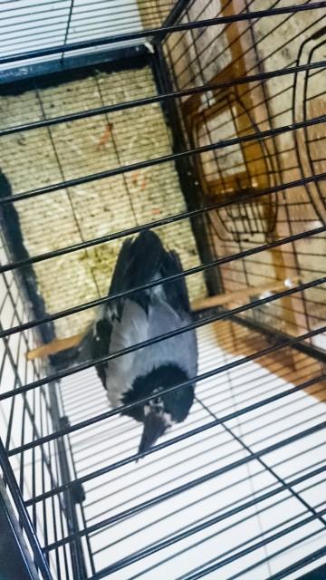 Контактный зоопарк Лесное посольство Ворона
