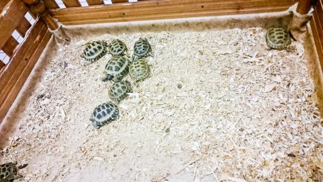 Контактный зоопарк Лесное посольство Черепахи