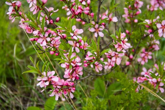 Цветы рядом с Бабай таш