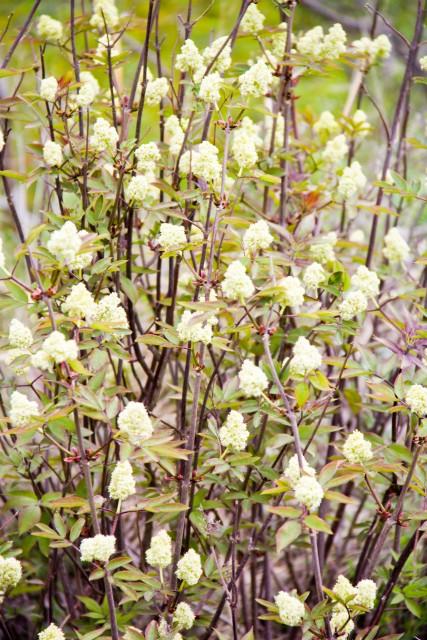 Цветущее дерево Бабай таш