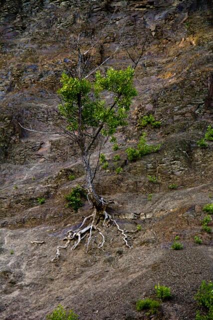 Дерево на скале река Зилим