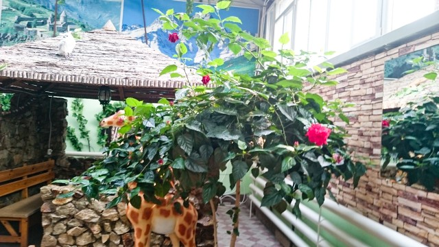 Зимний сад на трассе Амур