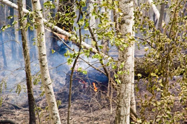 Лесные пожары трасса Лена