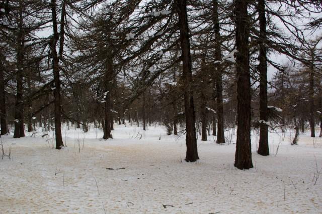 Лес на Баштау