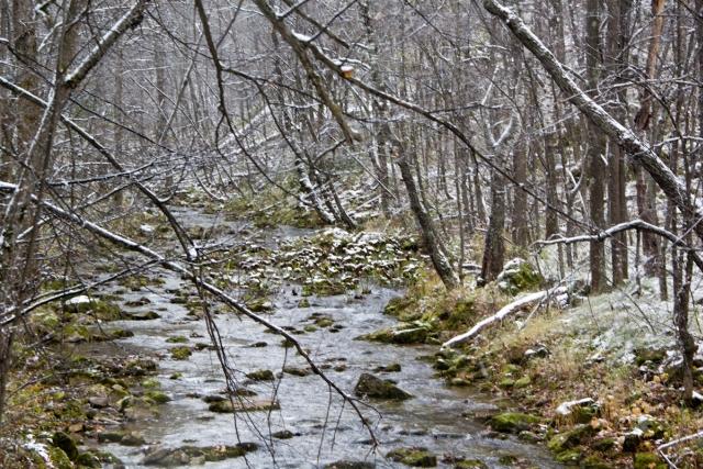 Река Бриш
