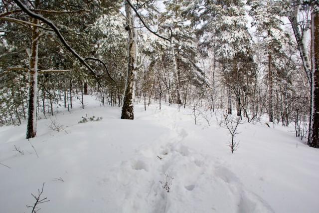 Лес на Бужа-тау