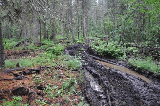 Путь к перевалу Дятлова