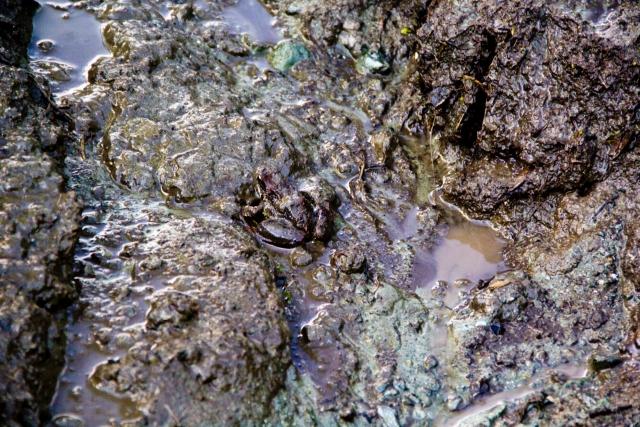Лягушка в грязи