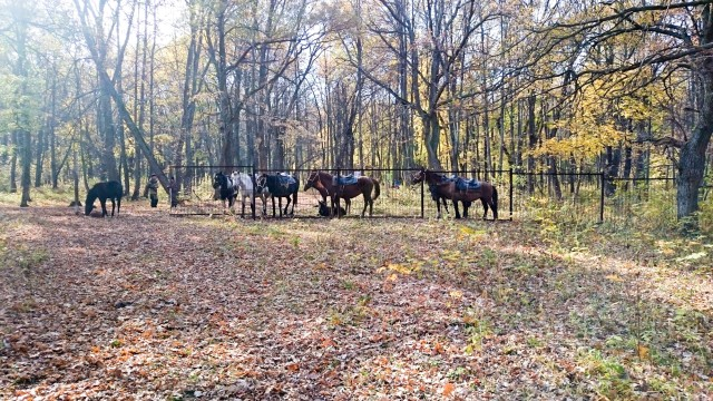 Лошади в Национальном парке Башкирия
