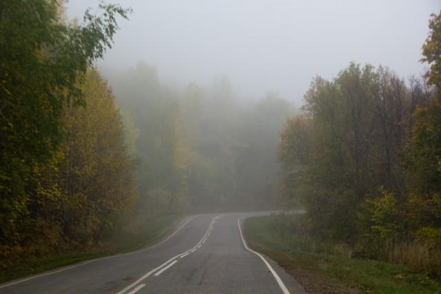 Дорога лес туман