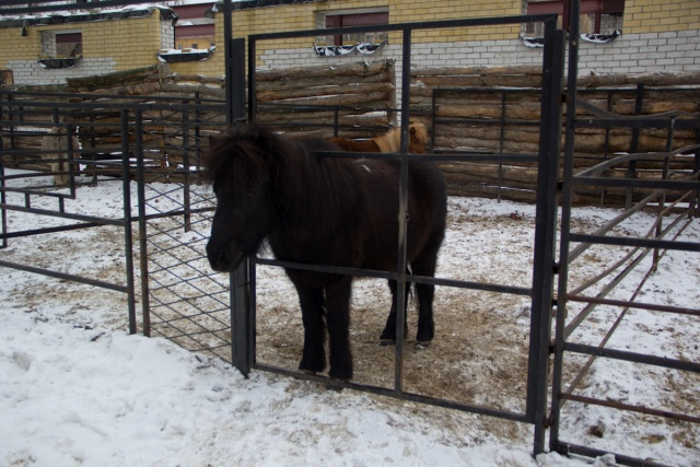 Лошади Воронежский зоопарк