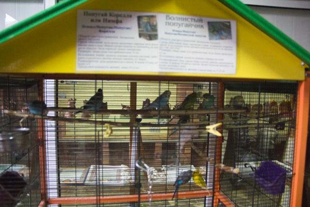 Попугаи Воронежский зоопарк