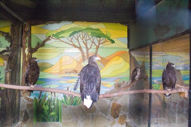 Степной орел Воронежский зоопарк