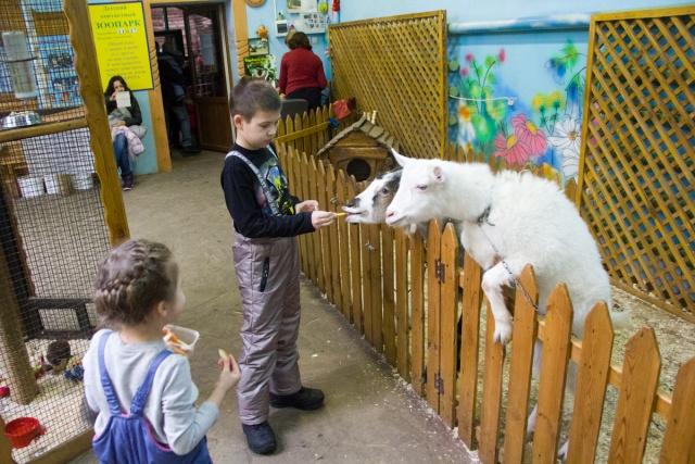 Контактный зоопарк Воронежский зоопарк
