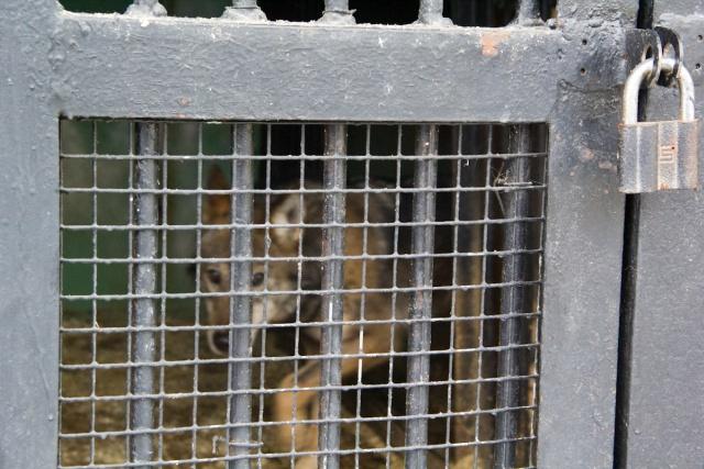 Волк Воронежский зоопарк
