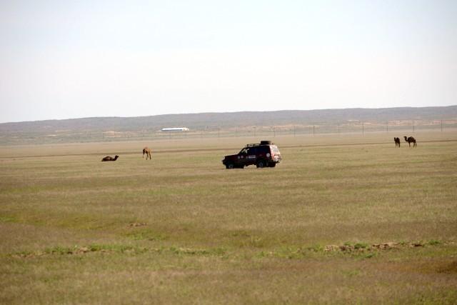 ТЛК с верблюдами