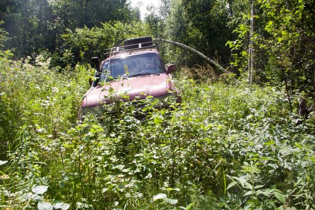 ТЛК80 в лесу