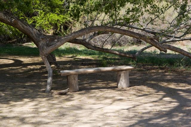 Скамейка под 700-летней ивой в национальном парке Алтын-Эмель