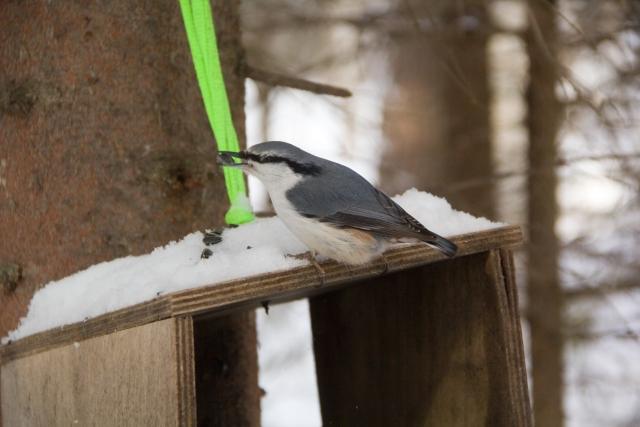 Птицы в Оленьих ручьях