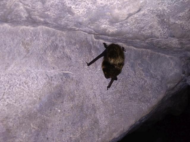 Летучие мыши Аракаевская пещера