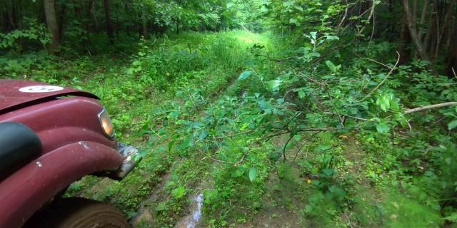 Проезд через лес